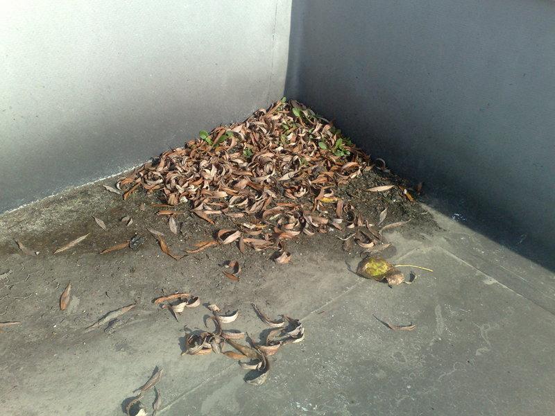 Inspectie en onderhoud dak 5